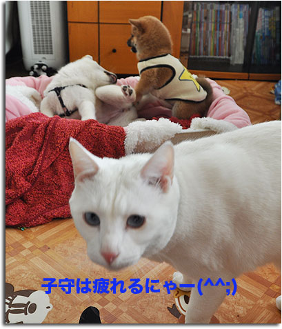 DSC_3876.jpg